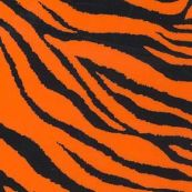 Zebra Fluo Orange