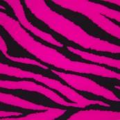 623 Cebra rosa fluo